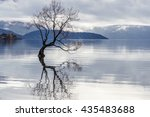 The Tree Is In The Lake Wanaka...