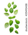 basil leaves  isolated on white   Shutterstock . vector #435493438
