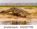 crocodile in uganda  africa | Shutterstock . vector #435537700