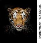 tiger action | Shutterstock . vector #435539086