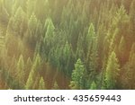 healthy green trees in a forest ... | Shutterstock . vector #435659443