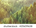 healthy green trees in a forest ...   Shutterstock . vector #435659638