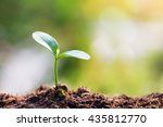 young sprout in springtime   | Shutterstock . vector #435812770