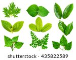 collection of green leaf... | Shutterstock . vector #435822589