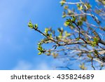 Branches Of A Tree In Front Of...
