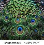 The Amazing Velvet Green And...
