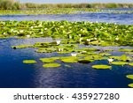 white water lilies in the... | Shutterstock . vector #435927280