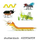 Amusing insects. Set of images of few funny creepy-crawly bugs. Vector illustration