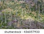 dead trees stands on hillside... | Shutterstock . vector #436057933
