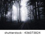 dark woods at night   Shutterstock . vector #436073824