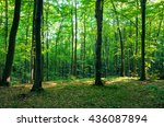 forest green | Shutterstock . vector #436087894