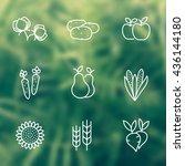 harvest line icons  white... | Shutterstock .eps vector #436144180