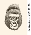 hand drawn gorilla illustration ... | Shutterstock . vector #436151170