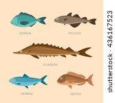 set of sea fish  sea trout ...   Shutterstock .eps vector #436167523