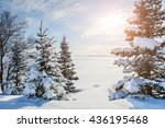 Snow Covered Trees Near The...