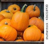 autumn harvest of pumpkins in... | Shutterstock . vector #436318930