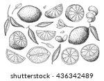 vector hand drawn lemon set.... | Shutterstock .eps vector #436342489