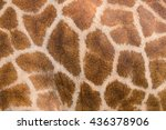 giraffe's skin and fur texture | Shutterstock . vector #436378906