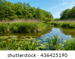 small river in a wood at summer   Shutterstock . vector #436425190