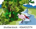 vector image of the exotic... | Shutterstock .eps vector #436431574