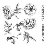 a set of sketches blooming... | Shutterstock .eps vector #436432804