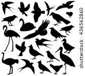 the image of birds vector... | Shutterstock .eps vector #436562860
