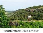 stork in nest on top of tree | Shutterstock . vector #436574419
