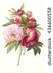 watercolor peonies botanical... | Shutterstock . vector #436600558