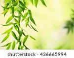 green leaves background | Shutterstock . vector #436665994