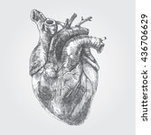 vintage hand drawn human heart  ... | Shutterstock .eps vector #436706629