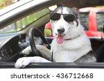 Cute Dog In Sunglasses Sitting...