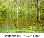 Swamp Forest With Trees...