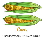 fresh raw corn cobs with seeds... | Shutterstock .eps vector #436754800