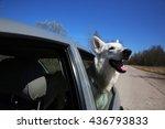 white swiss shepherd dog... | Shutterstock . vector #436793833