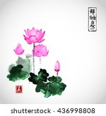 lotus flowers hand drawn with... | Shutterstock .eps vector #436998808