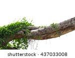 Vine On Tree In White Background