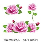 pink rose flower isolated on... | Shutterstock .eps vector #437113534