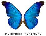 beautiful blue butterfly wings... | Shutterstock . vector #437175340