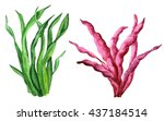 watercolor sea weeds set... | Shutterstock . vector #437184514