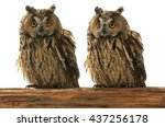 Two Owl On A White Background...