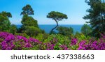 gardens of naples. view on... | Shutterstock . vector #437338663