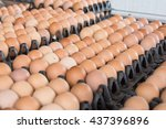 eggs from chicken farm in the... | Shutterstock . vector #437396896