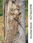 Small photo of Tree bark laceration texture
