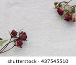 "Dried Flower ""rose"""