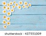 chamomile  flower over blue... | Shutterstock . vector #437551009
