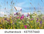 Wild Flowers Meadow With Sky I...
