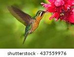 Flying Hummingbird. Orange And...