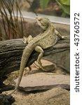 A Lizard Climbing Up Onto A Log.