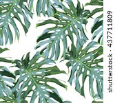 monstera palm leaves on the... | Shutterstock .eps vector #437711809