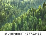 healthy green trees in a forest ... | Shutterstock . vector #437713483